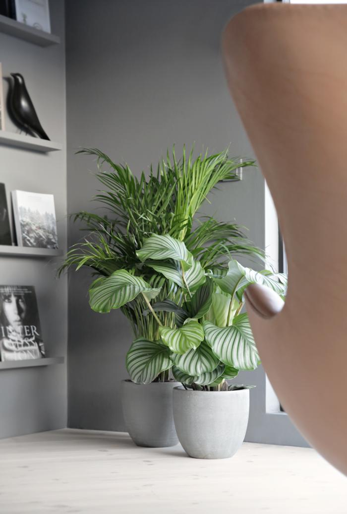 Green plants_concrete pots